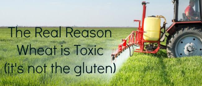 Dangers of GMO